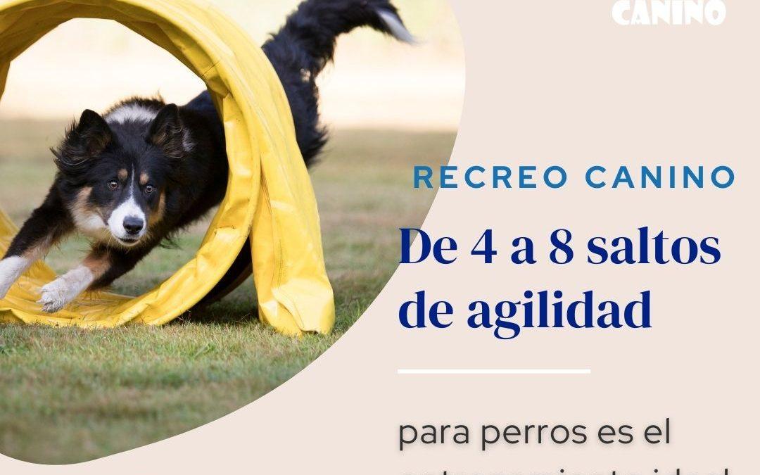 De 4 a 8 saltos de agilidad para perros es el entrenamiento ideal
